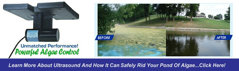 Powerful Algae Control